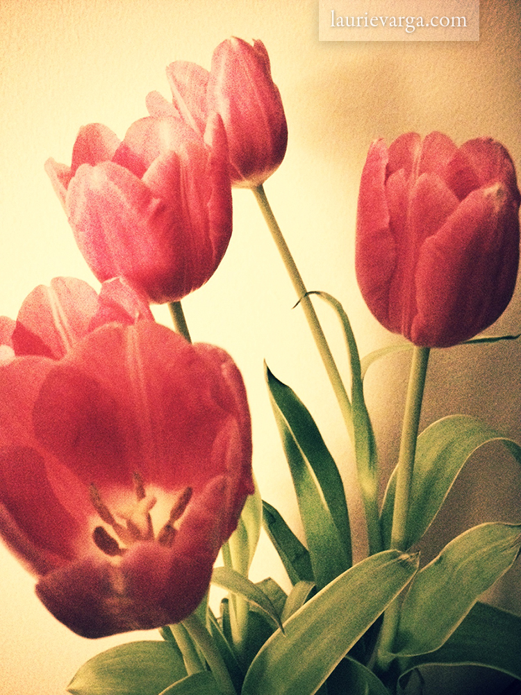 Warm up the winter with tulips