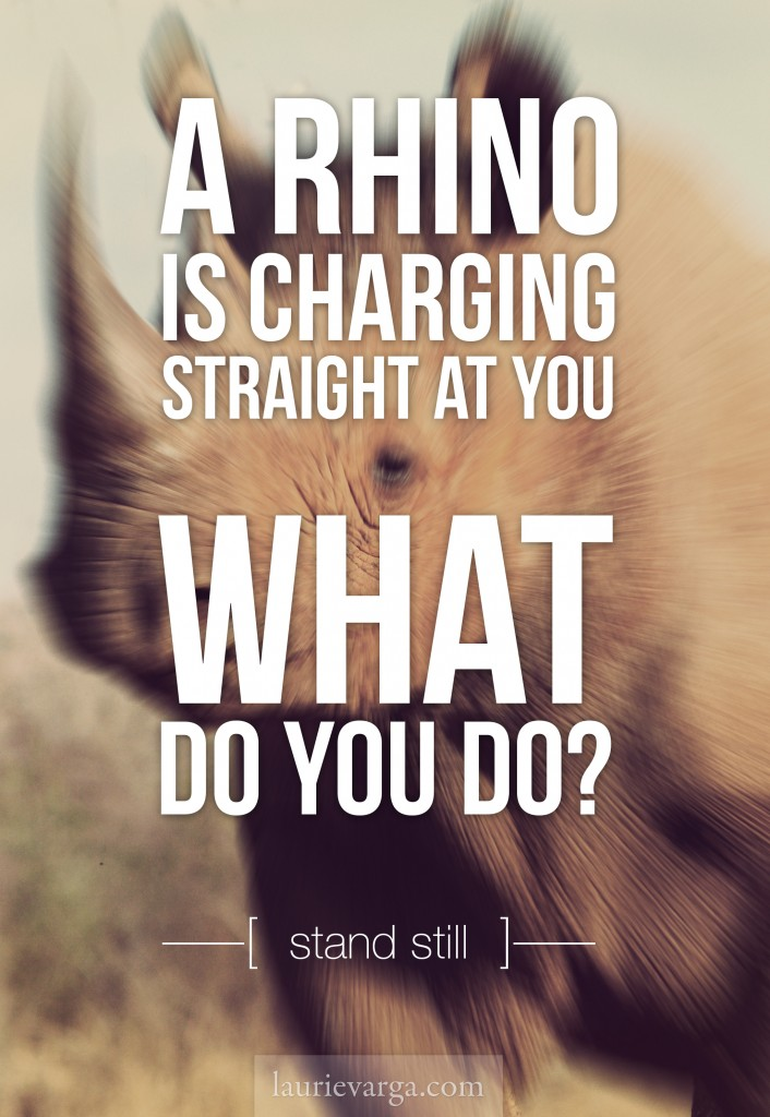 When a rhino charges. What do you do? | laurievarga.com